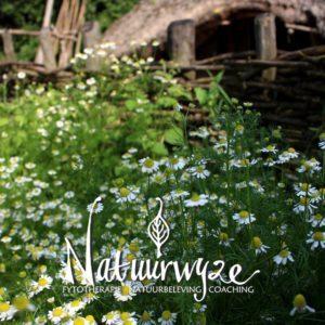 Kruidenwandeling Natuurwijze